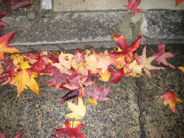 Autumn leaves 2 002